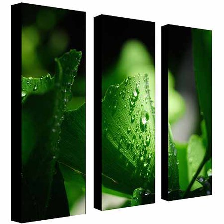 Trademark Art Green Pearl by Philippe Sainte-Laudy, 3-Piece Panel Set, 8x24