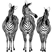 My Wonderful Walls Zebra Trio Wall Stickers