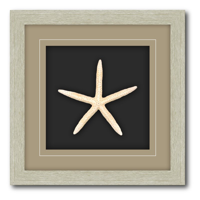 Shadow Box Frame Double Matte Mounted White Starfish with Driftwood Molding