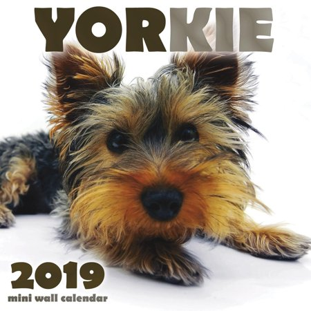 Yorkie 2019 Mini Wall Calendar (Paperback)