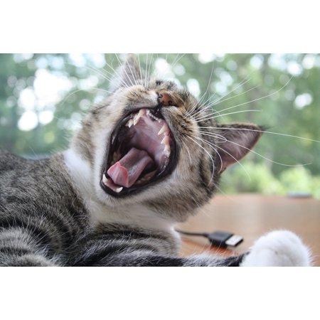 Fun Center Cat - LAMINATED POSTER Fun Yawn Cat Poster Print 11 x 17