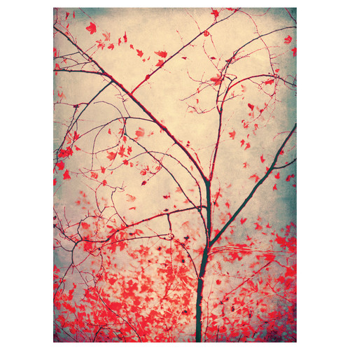 My Wonderful Walls Tree Photography Wall Decal