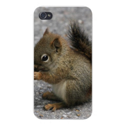 Apple Iphone Custom Case 4 4s White Plastic Snap on - Cute Baby Squirrel Sitting Chewing