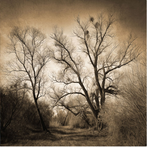 "Trademark Fine Art ""Sepia Ghost"" Canvas Art by Philippe Sainte-Laudy"