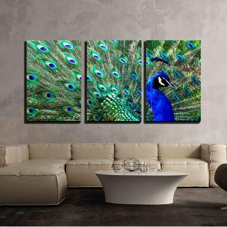 Many Canvas Colors - wall26 - 3 Piece Canvas Wall Art - Male Peacock Displaying His Colorful Feathers - Modern Home Decor Stretched and Framed Ready to Hang - 24