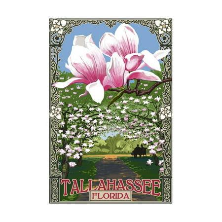 Tallahassee, Florida - Magnolia Trees Print Wall Art By Lantern Press - Party City In Tallahassee Florida