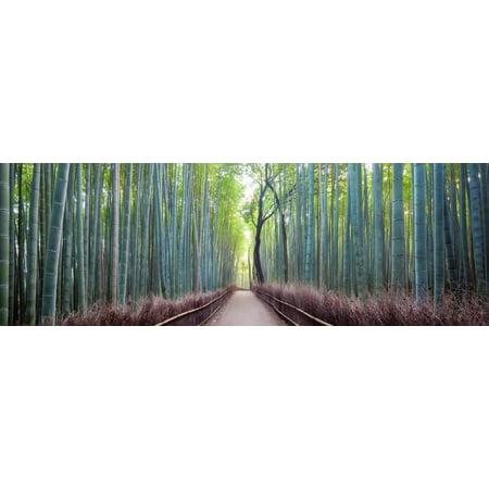 Arashiyama Bamboo Grove, Kyoto, Japan Green Forest Path Landscape Photography Print Wall Art By Simonbyrne