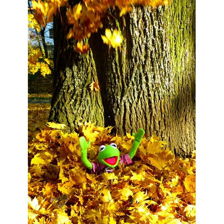 Peel-n-Stick Poster of Fun Frog Leaves Kermit Sheet Rain Colorful ...