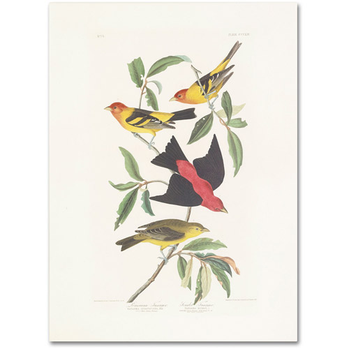 "Trademark Fine Art ""Louisiana Tanager"" Canvas Art by John James Audubon"
