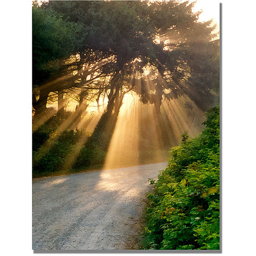 "Trademark Fine Art ""Sunlight Through Trees"" Canvas Art by Michelle Calkins"