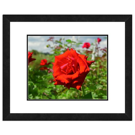 - Red Rose, Flower Framed Photo by Photo File