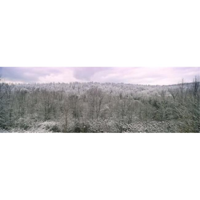 Panoramic Images PPI135825L Snow covered forest  Kentucky  USA Poster Print by Panoramic Images - 36 x 12