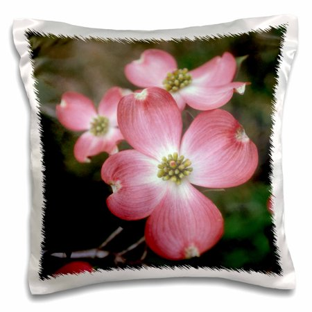 3dRose Pink dogwood blooms - Pillow Case, 16 by - Dogwood Bloom