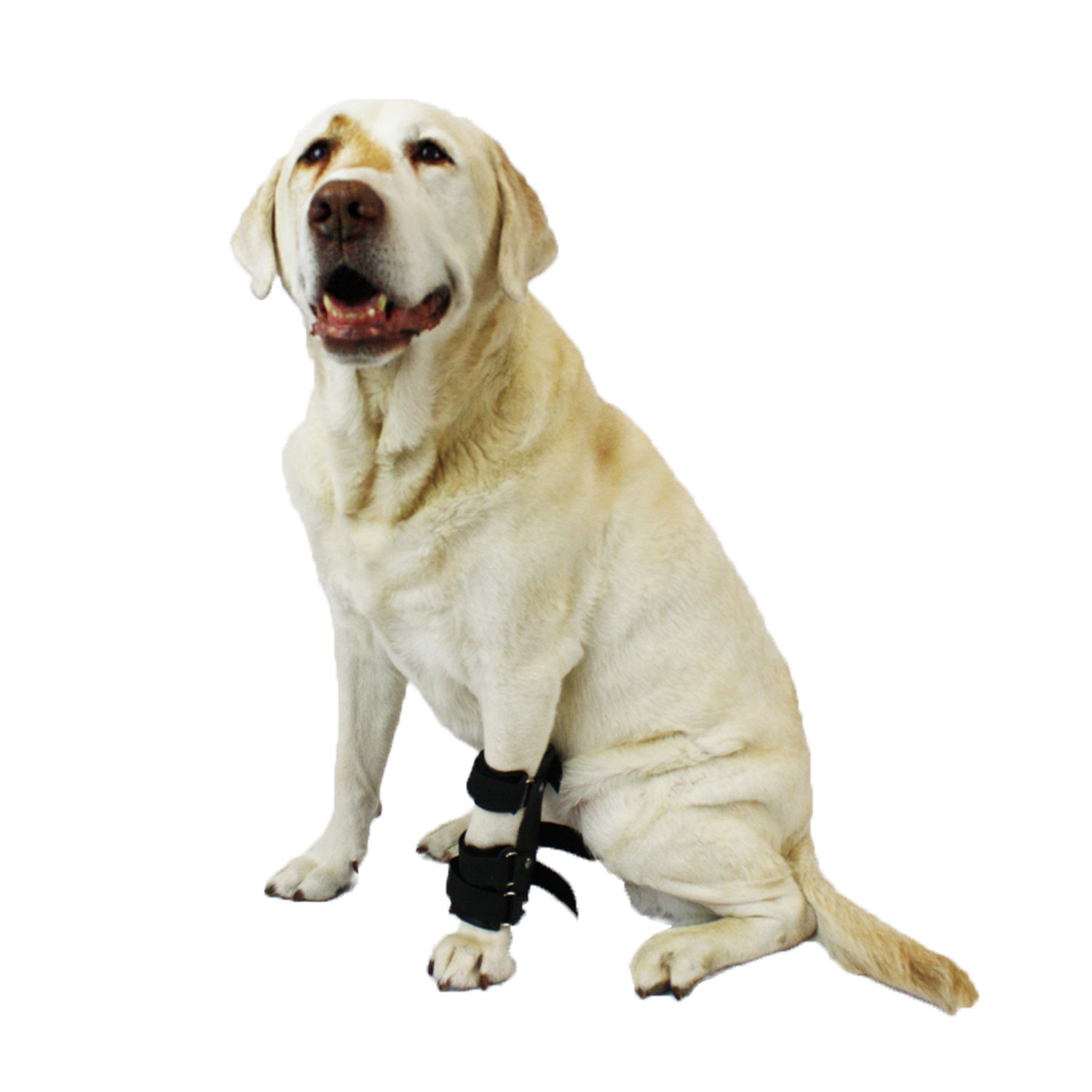 Walkin' Pet Splint for Dogs, Canine Carpal Style Front Leg