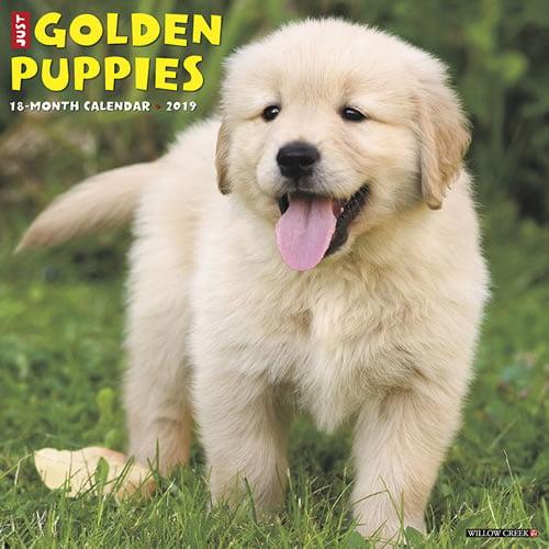 Willow Creek Press 2019 Just Golden Puppies Wall Calendar