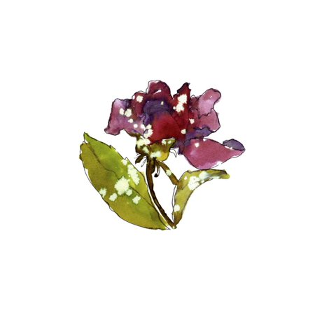 - Marsala Rose Print Wall Art By Cayena Blanca