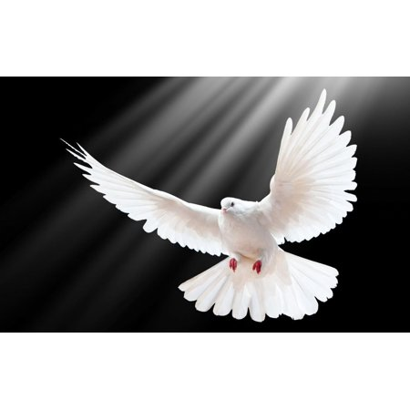 Laminated Poster White Dove Poster Picture Flying Bird Morning Peace Love Poster Print 24 x (Peace Symbol Poster)