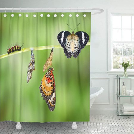 SUTTOM Colorful Cycle Leopard Lacewing Cethosia Cyane Euanthes Butterfly Caterpillar Shower Curtain 60x72 inch - image 1 de 1