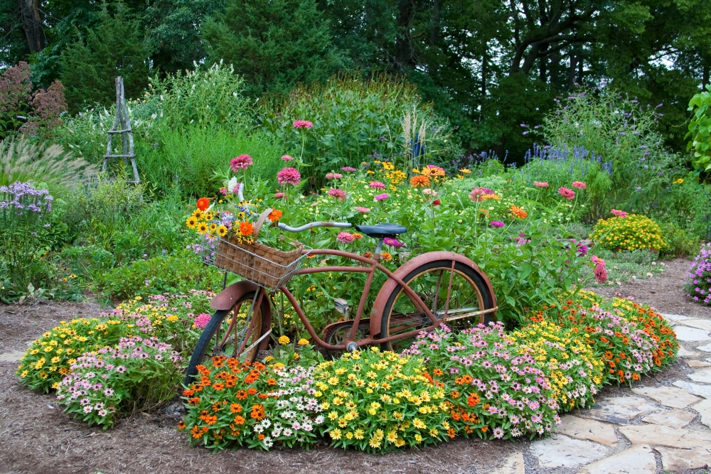 Old Bicycle With Flower Basket In A Garden With Stone Path Zinnias Obelisk  And Trellis Marion