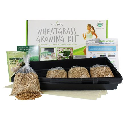 Wheatgrass Growing Kit - Hydroponic - Organic - Non-GMO - Easy & Fast to Grow Wheat Grass at Home, The perfect way to grow wheatgrass hydroponically at home..., By Handy (Best Way To Grow Wheatgrass Indoors)