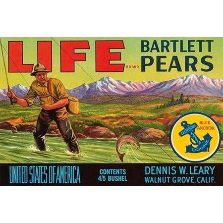 Life Brand Bartlett Pears- Fine Art Canvas Print (20