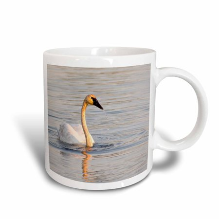 3dRose Trumpeter Swan, bird, Seney NWR, Michigan - US23 CHA0134 - Chuck Haney, Ceramic Mug, (Michigan Logo Mug)