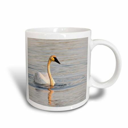 3dRose Trumpeter Swan, bird, Seney NWR, Michigan - US23 CHA0134 - Chuck Haney, Ceramic Mug, 11-ounce