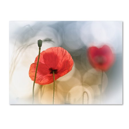 Trademark Fine Art 'Morning Poppies' Canvas Art by Steve Moore - Ac Moore Canvas