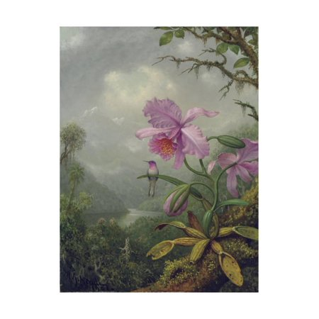 Hummingbird Perched on an Orchid Plant, 1901 Traditional Animal Floral Botanical Art Print Wall Art By Martin Johnson Heade