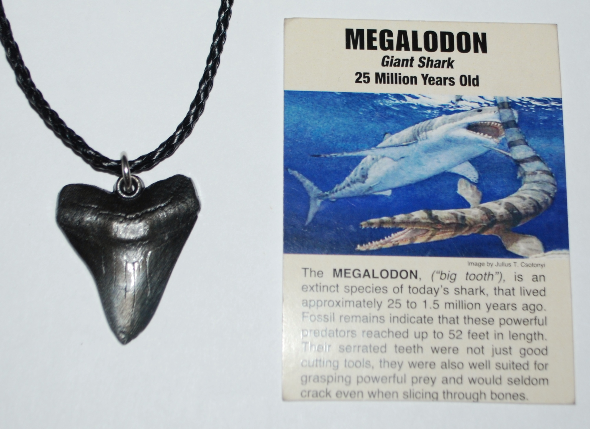 Show me a picture of a megalodon tooth