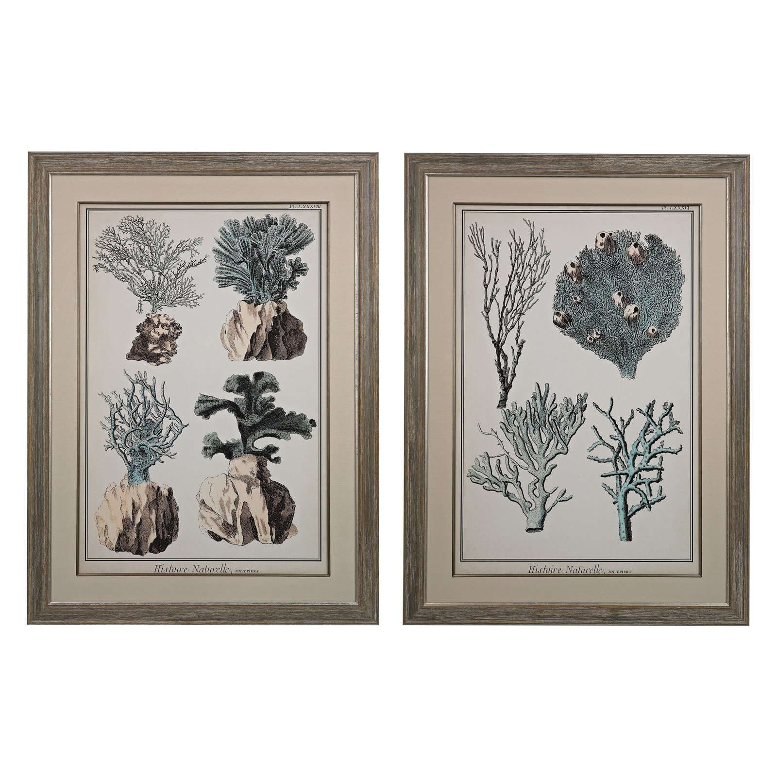 Sterling Oversized Coral Species I II Wall Art - Set of 2