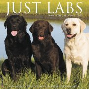 Just Labs 2020 Wall Calendar (Dog Breed Calendar) (Other)