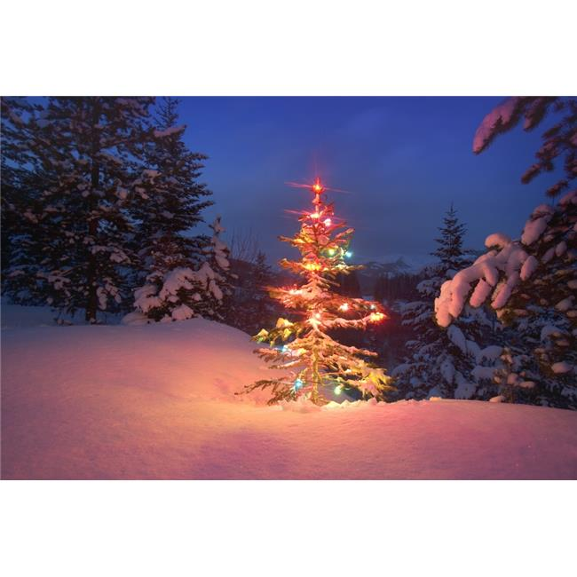 Posterazzi DPI1773883LARGE Christmas Tree At Night Poster Print by Carson Ganci, 34 x 22 - Large - image 1 de 1