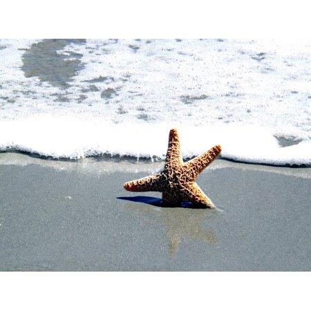 LAMINATED POSTER Summer Sea Shell Ocean Beach Star Fish Travel Poster Print 24 x 36