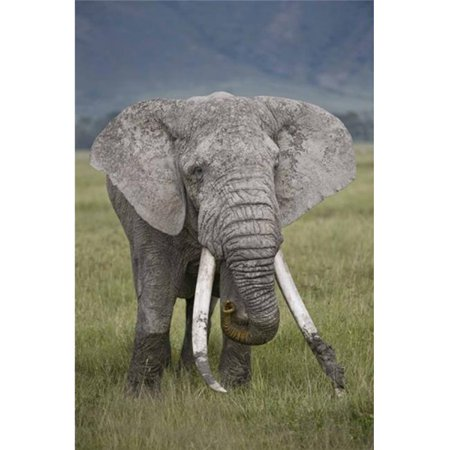 Panoramic Images PPI139624 African elephant - Loxodonta africana  Tanzania Poster Print by Panoramic Images - 16 x 24 - image 1 of 1