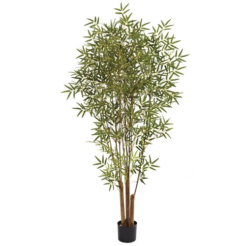 Bloomsbury Market Japanese Bamboo Tree in Pot