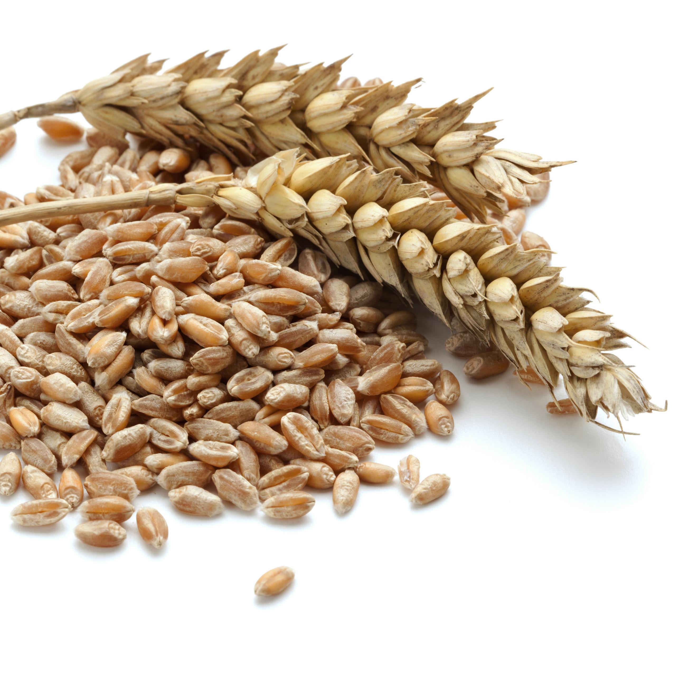 Зерно пшеницы в картинке