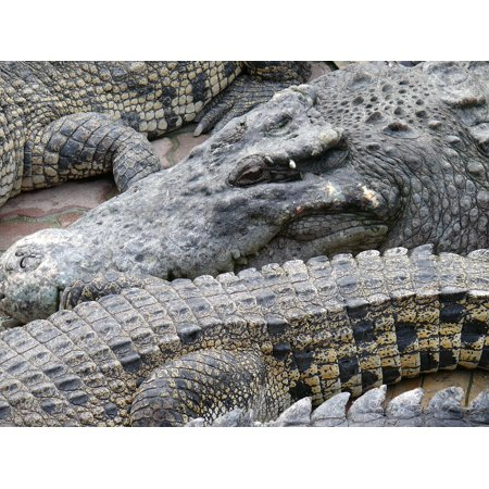 Canvas Print Beast Animals Zoo Reptile Crocodile Stretched Canvas 10 x