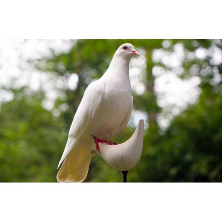 LAMINATED POSTER Bird White Hope Symbol Dove Peace Nature Poster Print 24 x 36