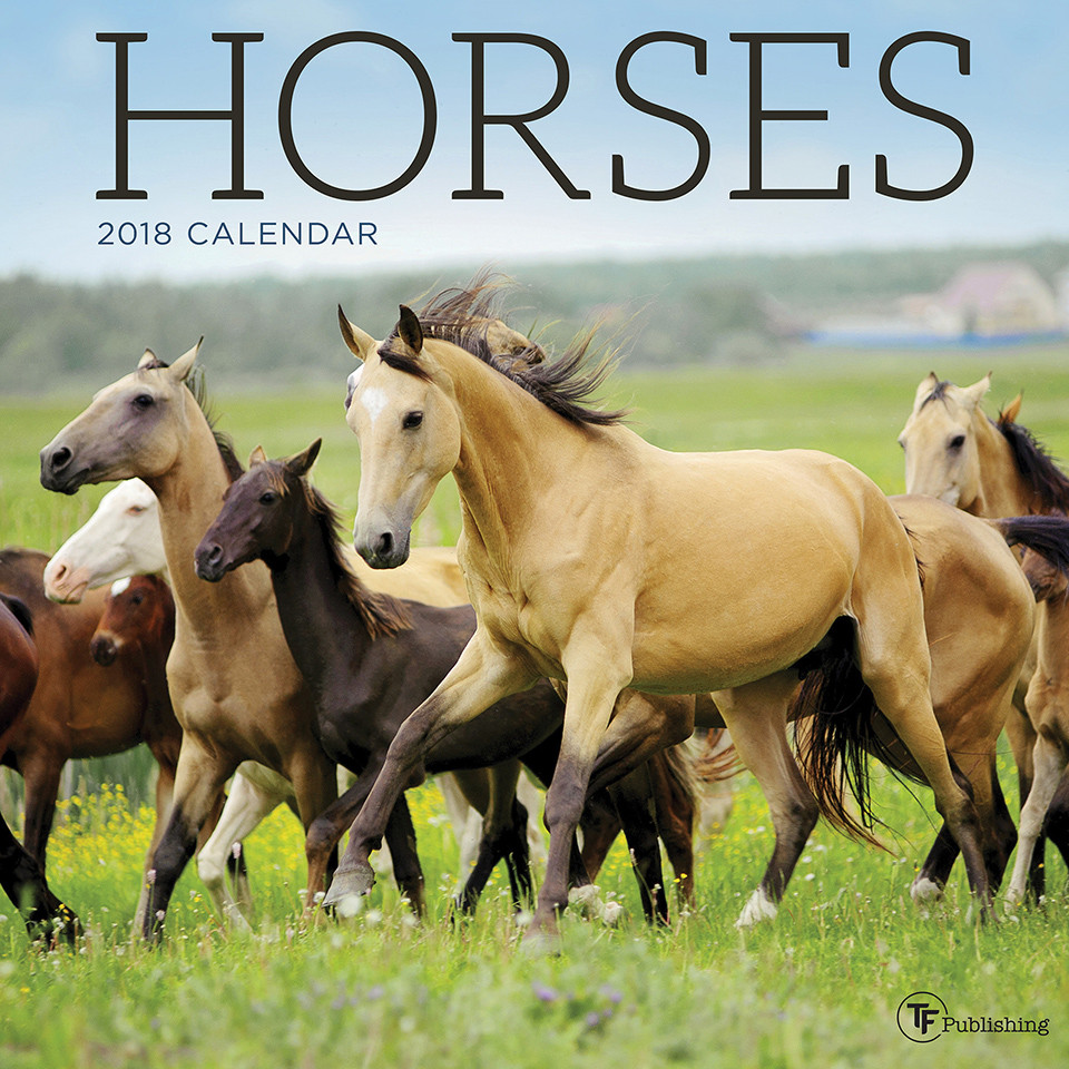 2018 Horses Wall Calendar by TF Publishing