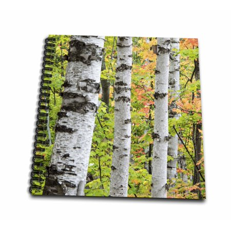 Maple Easels - 3dRose USA, Michigan. Birch trunk and maple leaves - Drawing Book, 8 by 8-inch