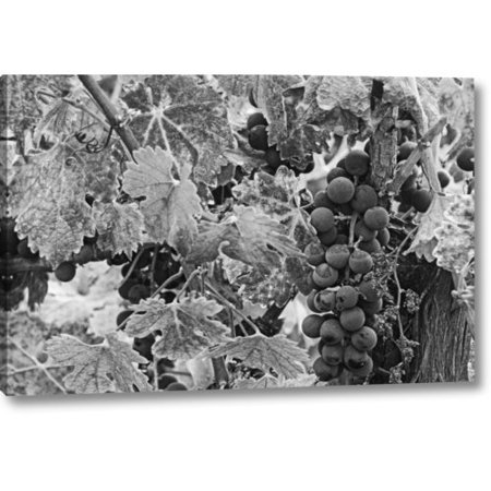 Napa Cellars Cabernet Sauvignon (Fleur De Lis Living 'CA, Napa Valley Cabernet Sauvignon Grapes' Photographic Print on Wrapped Canvas)