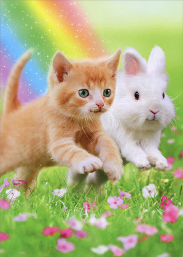 Kitten With Bunny Ears Cat Easter Card Greeting Card by Avanti Press