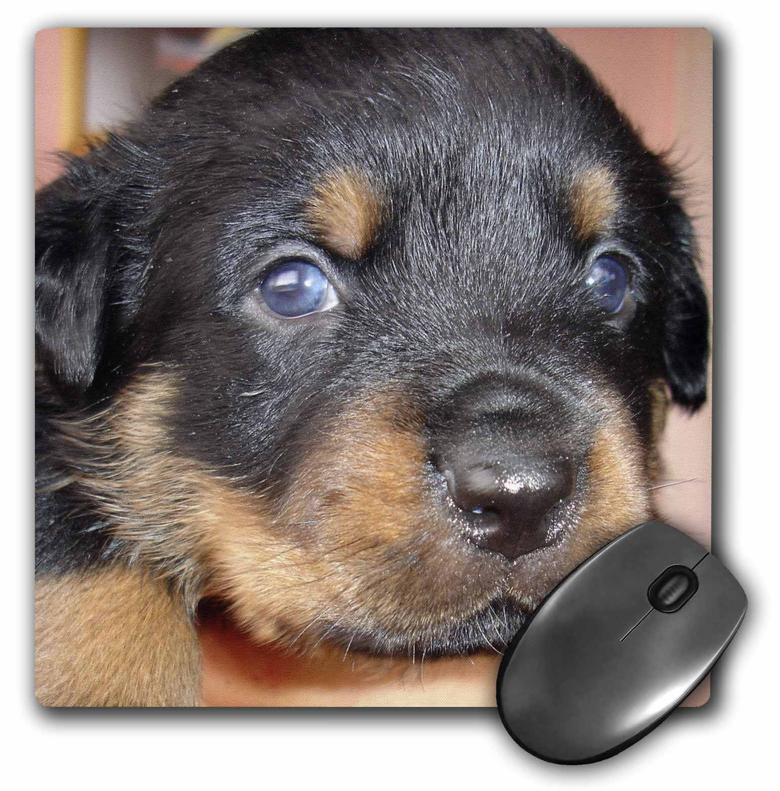 3drose Its A Boy Rottweiler Rottweilers Rottie Rottie Owner