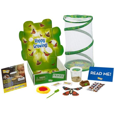 Insect Lore Butterfly Garden Gift Set with Live Caterpillars and Feeding kit