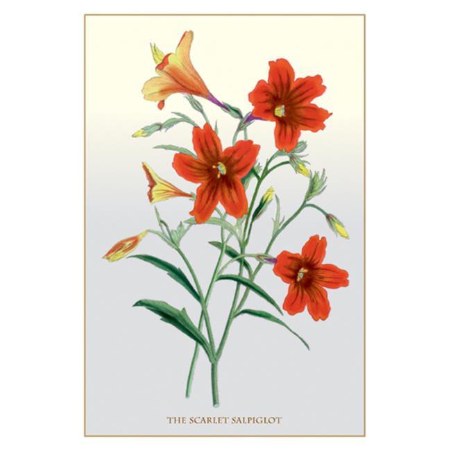 Buy Enlarge 0-587-11546-7P20x30 Scarlet Salpiglot- Paper Size P20x30