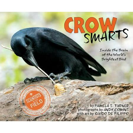 Bird Brain Flowers - Crow Smarts : Inside the Brain of the World's Brightest Bird
