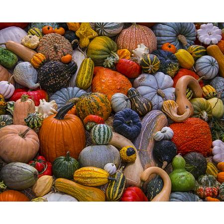 - Vermont Christmas Company Autumn Harvest - 1000 Piece Jigsaw Puzzle