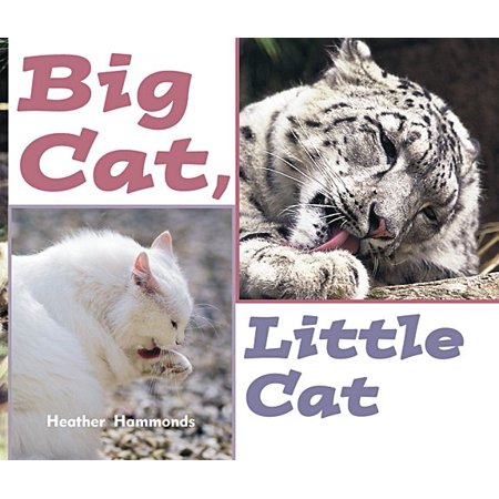 Rigby Focus Emergent : Leveled Reader Big Cat, Little Cat