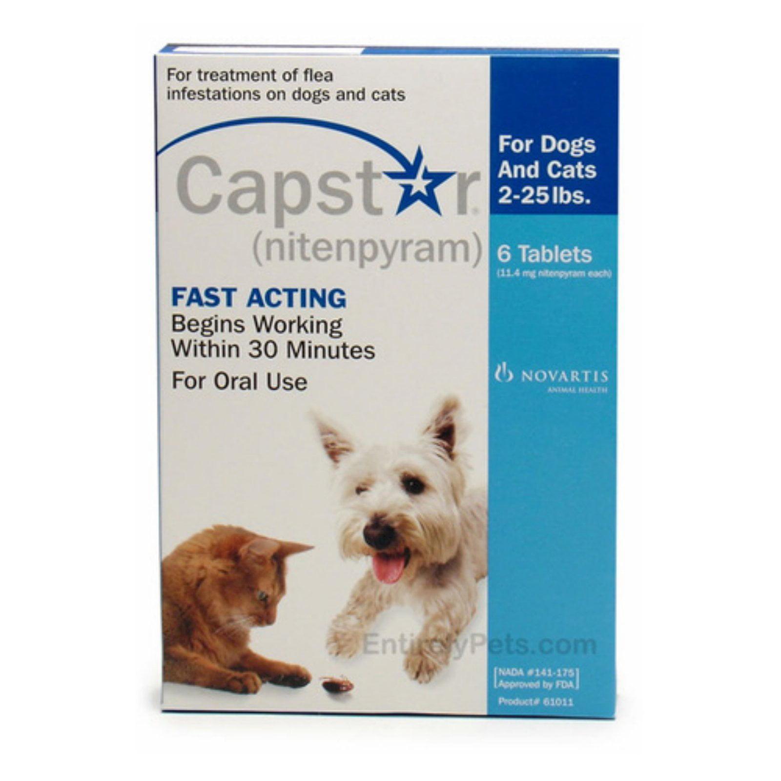capstar flea treatment dog flea u0026amp tick care walmart com